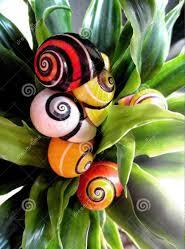 The legend of the most beautiful snail in Cuba