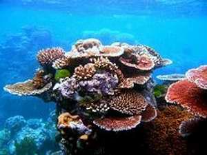 Científicos de Cuba y Estados Unidos estudiarán arrecifes coralinos